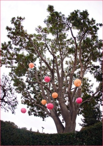 Pink and orange paper lanterns in a tree