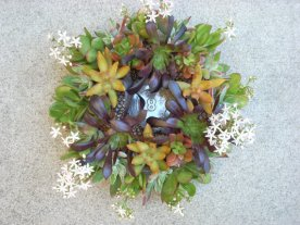 Succulent centrepieces, by SucculentSalon on etsy.com