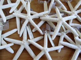 Starfish wedding decor, by PinkPelicanDesigns on etsy.com