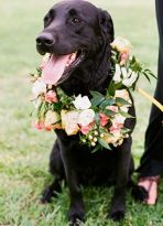 Decorate your dog for the wedding! {via lover.ly}