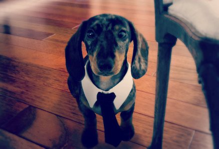Custom pet necktie, by youhadmeatwoof on etsy.com