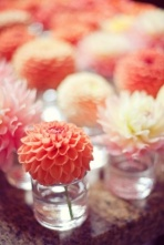 Dahlias are so pretty {via elizabethannedesigns.com}