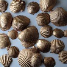 Gold seashells - www.etsy.com/shop/WeddedBlissDecor
