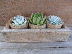Succulent centerpiece - www.etsy.com/shop/SucculentsGalore